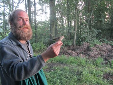 Onderzoek naar waterrietzanger in de Overslag - Beringen