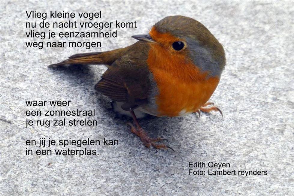 Beringen Vlieg Kleine Vogel Internetgazet
